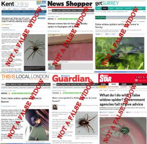 false_false_widows